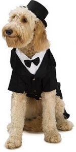 Dapper Dog Big Dog Pet Costume